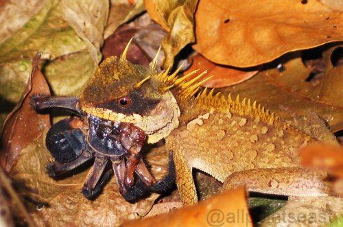 Khao Soi Dao Wildlife Sanctuary, Thailand