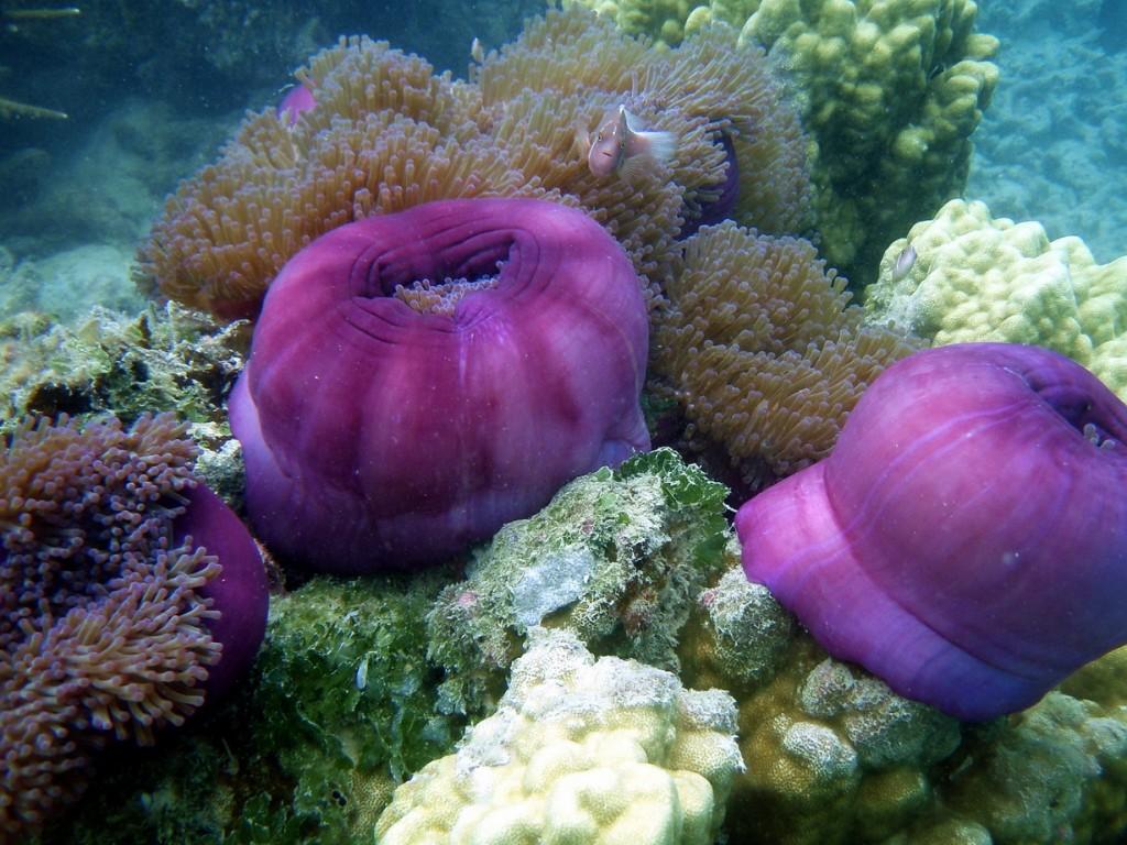 Coral reef, Perhentians