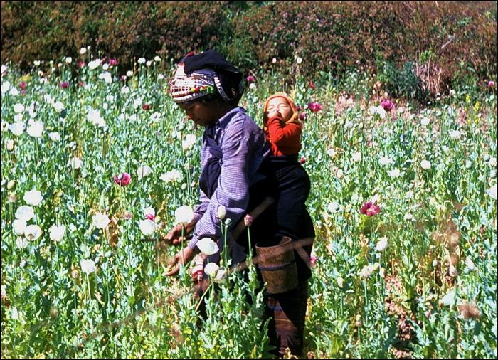 Akha girl in poppy-field c 1995