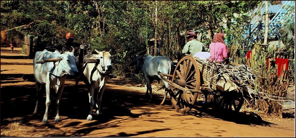 Ox carts, Kompong Thom