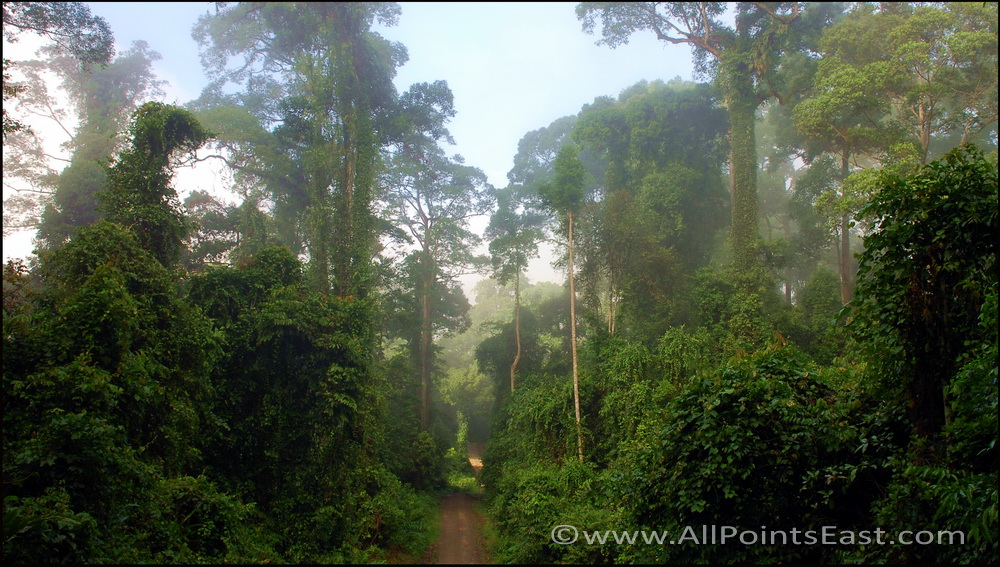 Danum  Valley, jungle trail