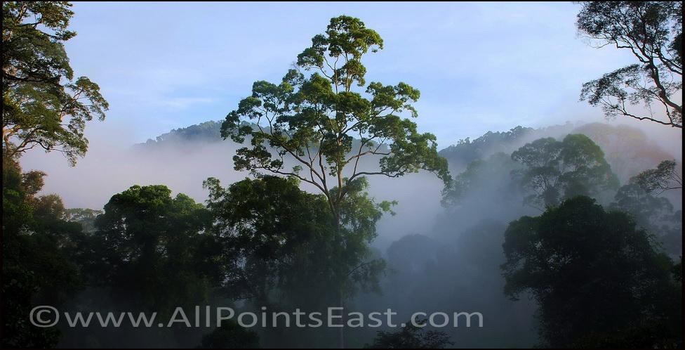 Danum Valley, trees in mist