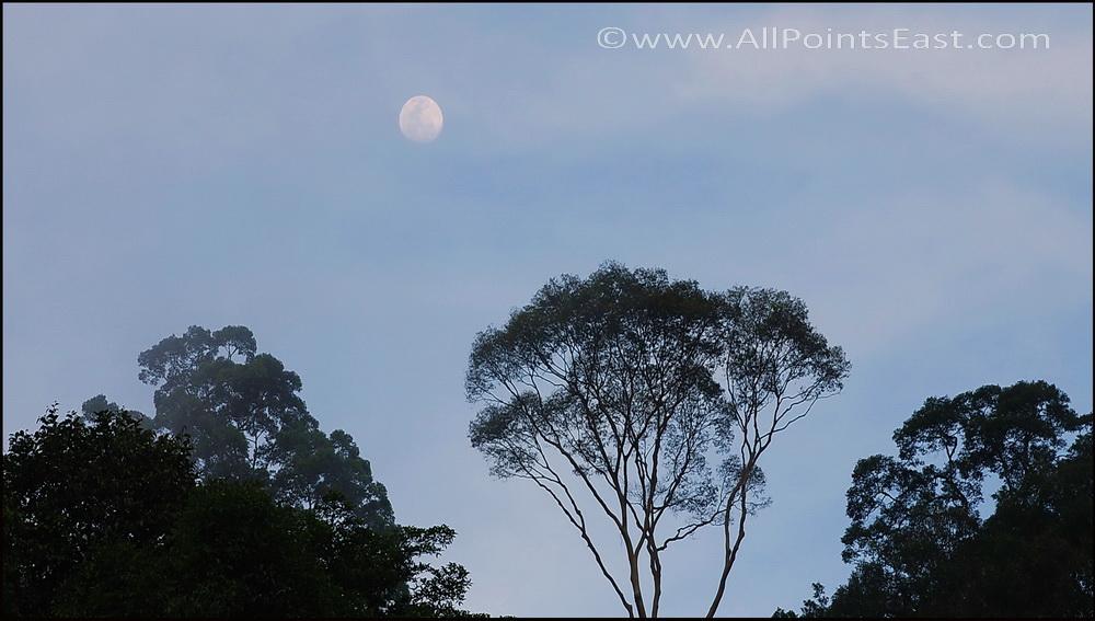 Danum Valley, trees & moon
