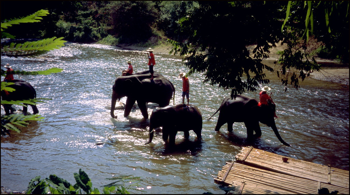 Elephants in the Mae Taeng Valley, Chiang Mai