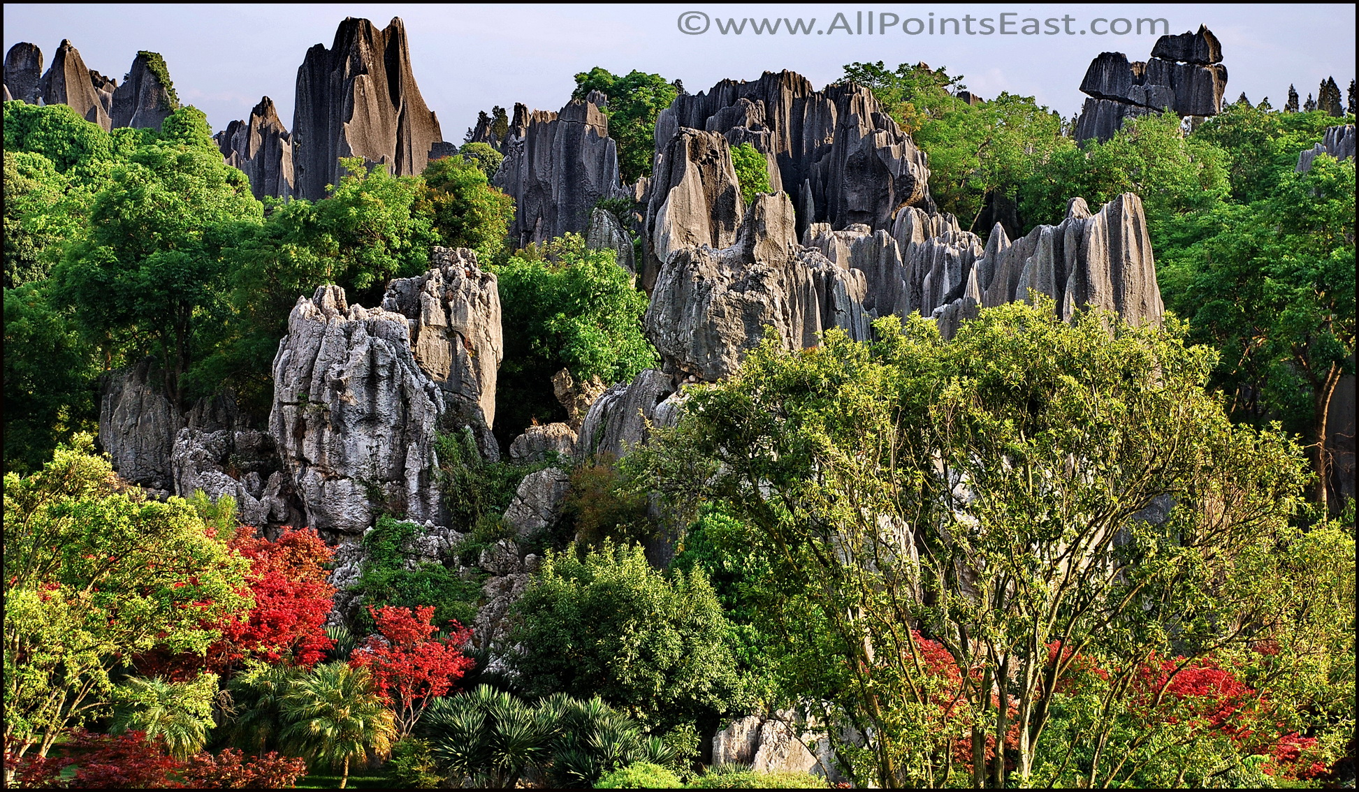Lush vegetation amongst the rocks