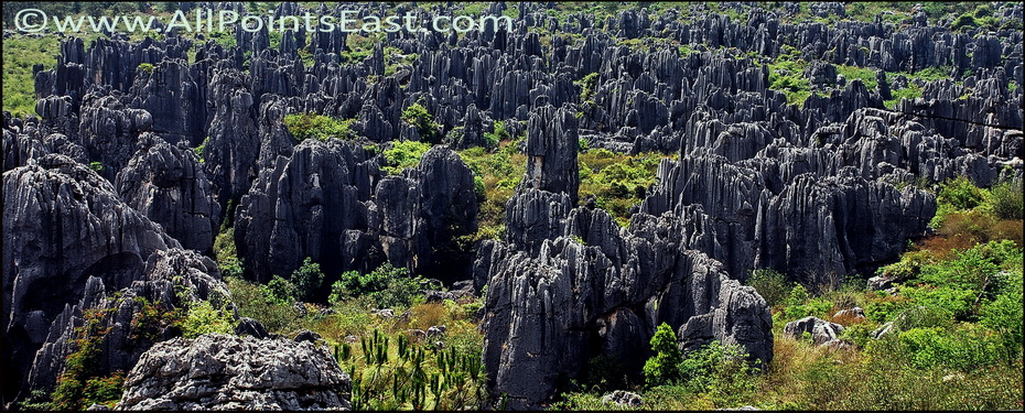 Stone Forest, overall view