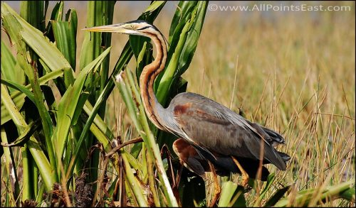 Thale Noi Bird Sanctuary