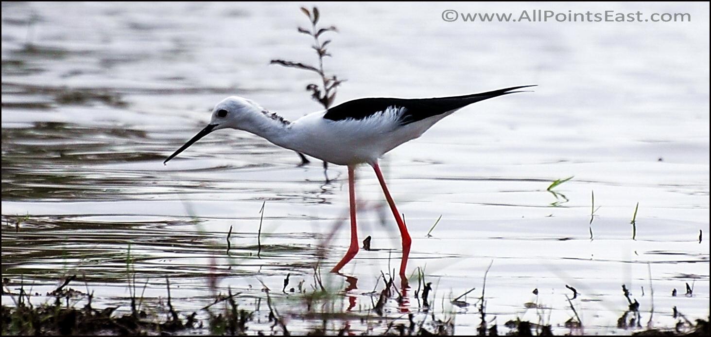 Thale Noi Bird Sanctuary, Thailand