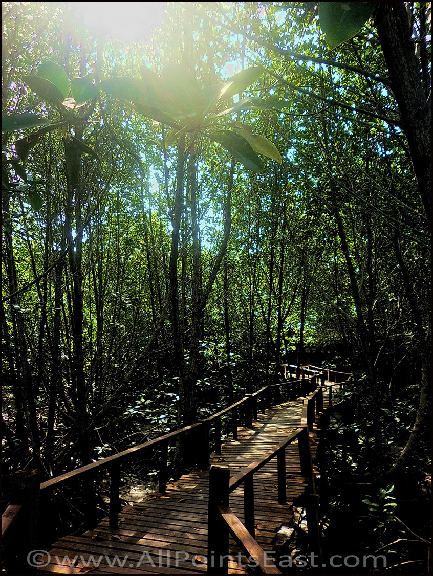 Reefs and Rainforests tour photos. Mangrove nature trail
