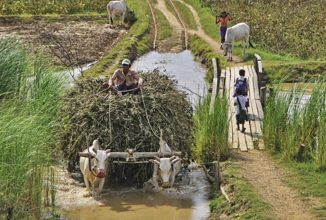 Burma (Myanmar) Monywa