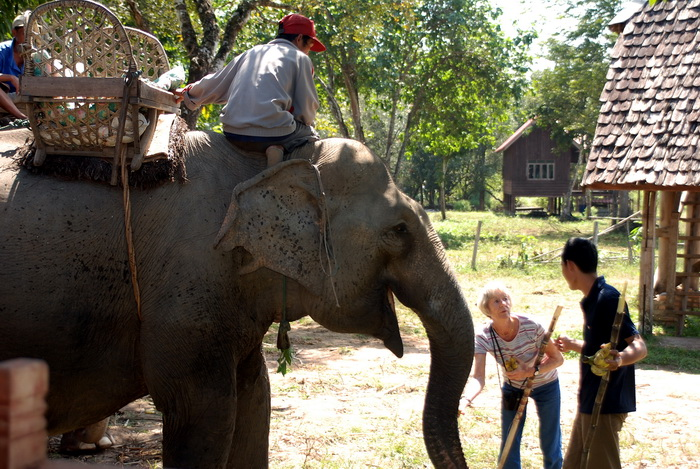 Meeting the elephants, Kietngong, Laos