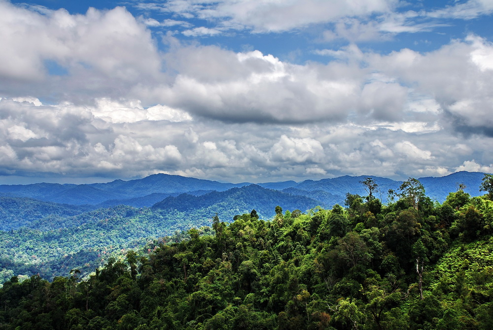 Thailand World Heritage Sites. Belum Forest with the hulls of Hala Bala in the distance