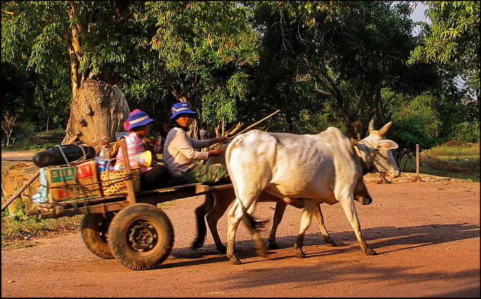Ox cart passing the entrance to Beng Melea Temple