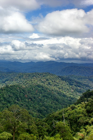 Malaysia family tour - the world's oldest rain-forest