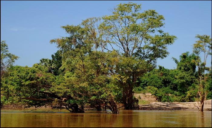 Pristine riverside scenery