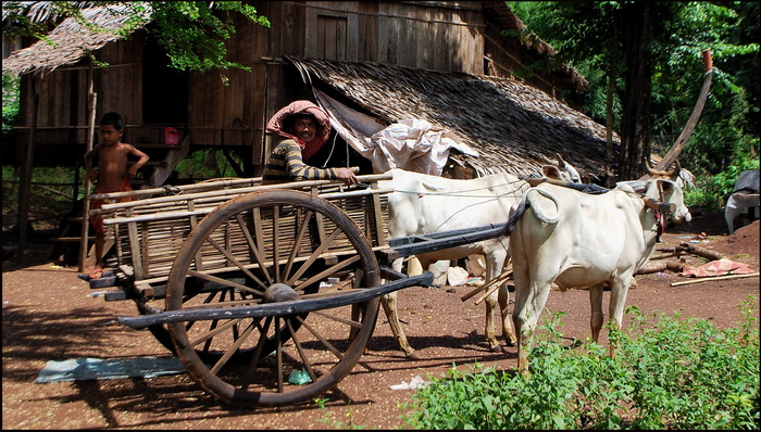 A very traditional style ox cart in Baray District, also Kompong Thom Province