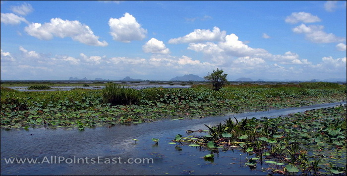 Thale Noi, Phattalung