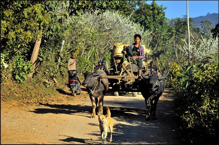 Traffic on the trekking trail