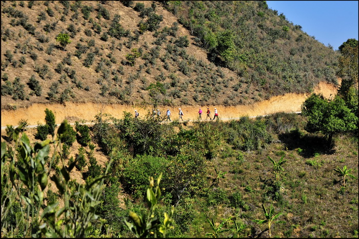 Hiking in the Shan Hills. Heading through tea plantations approaching the village