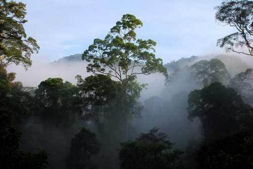 Borneo's Danum Valley