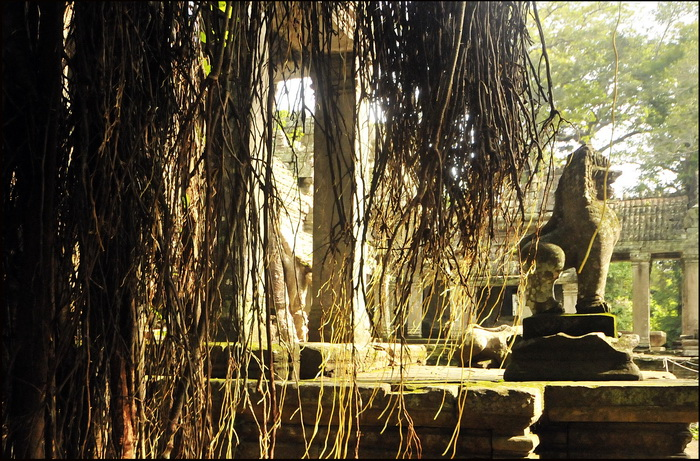 And a guardian lion seen through the hanging roots of a ficus
