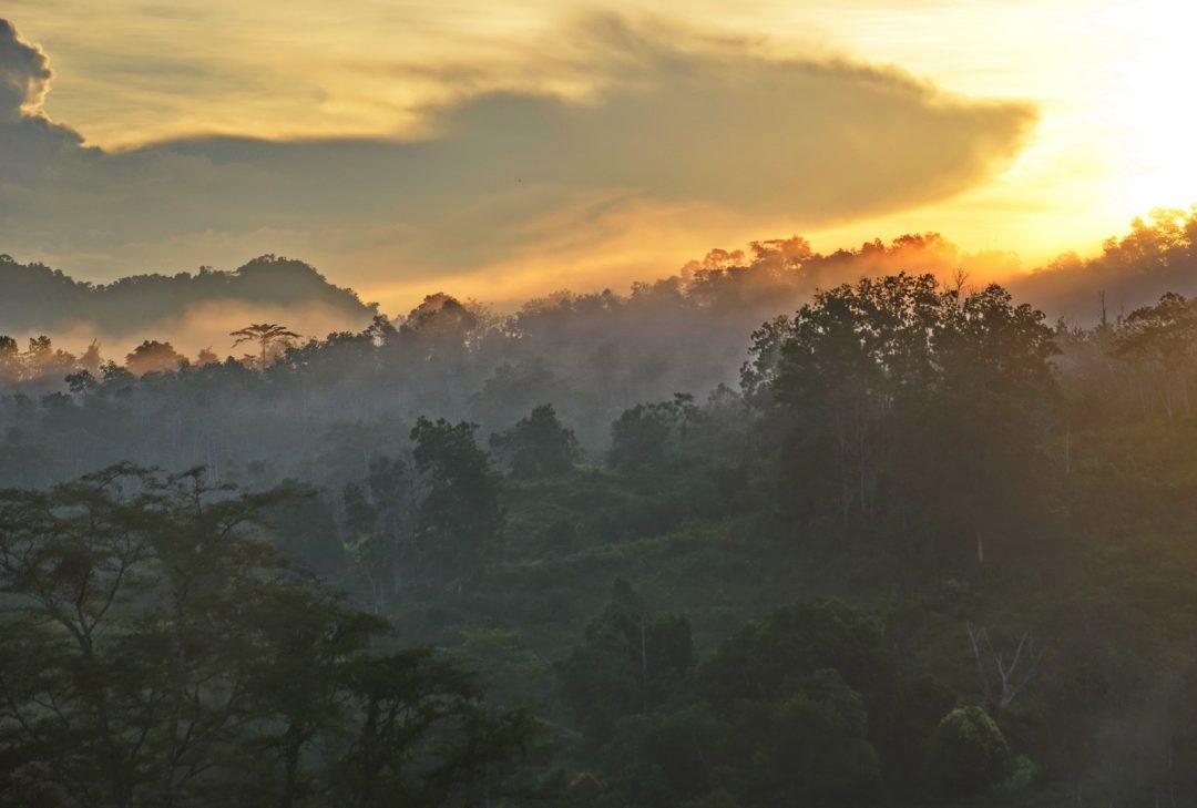 Malaysia, Borneo Sabah Tour, Sabah Tea