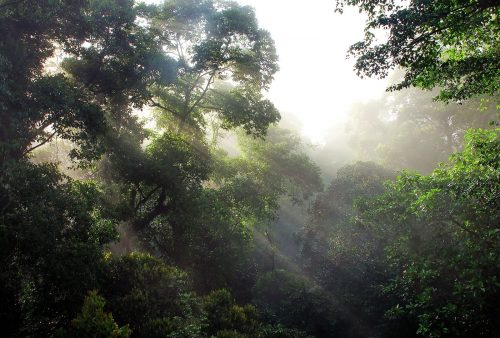https://allpointseast.com/wp-content/uploads/2012/09/Danum-Valley-trees-sunrays-500x338.jpg