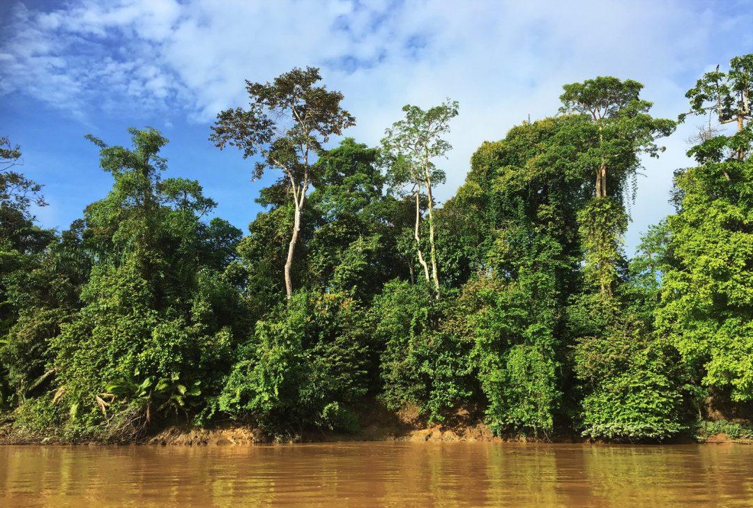 Malaysia, Borneo, Kinabatangan