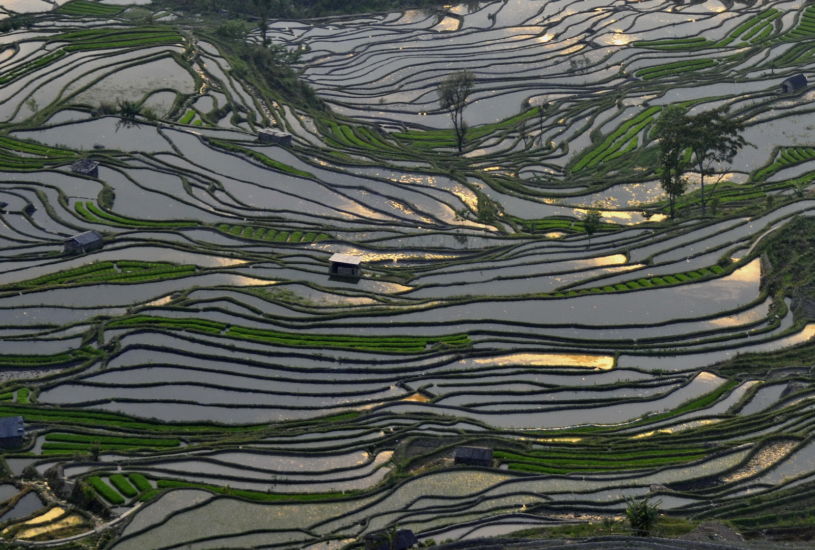 China, Hani rice terraces, Yuanyang