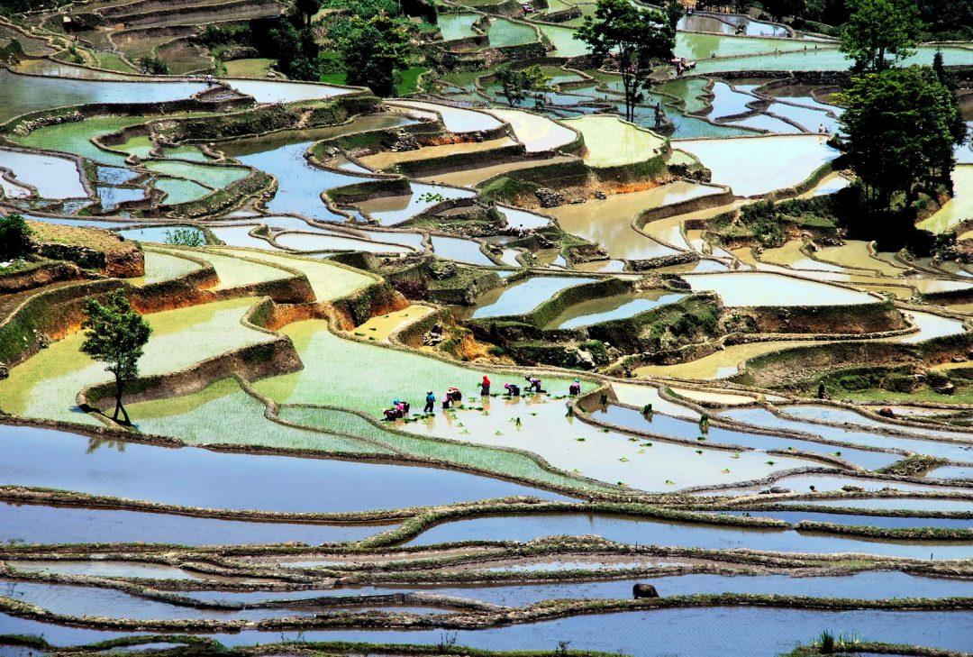 China, Yuanyuang rice terraces