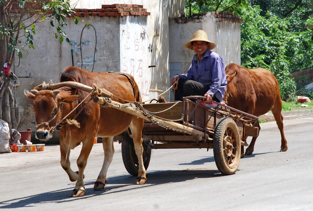 China, ox cart near Jianshui