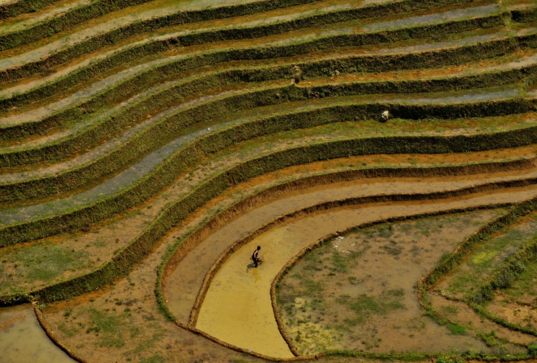 Vietnam, rice terraces