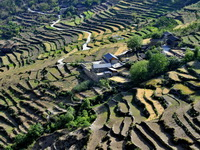 Rice terraces at Walnut Grove Village