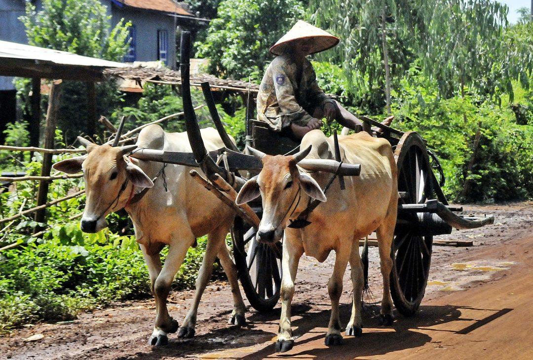 Cambodia tour, Kompong Tom