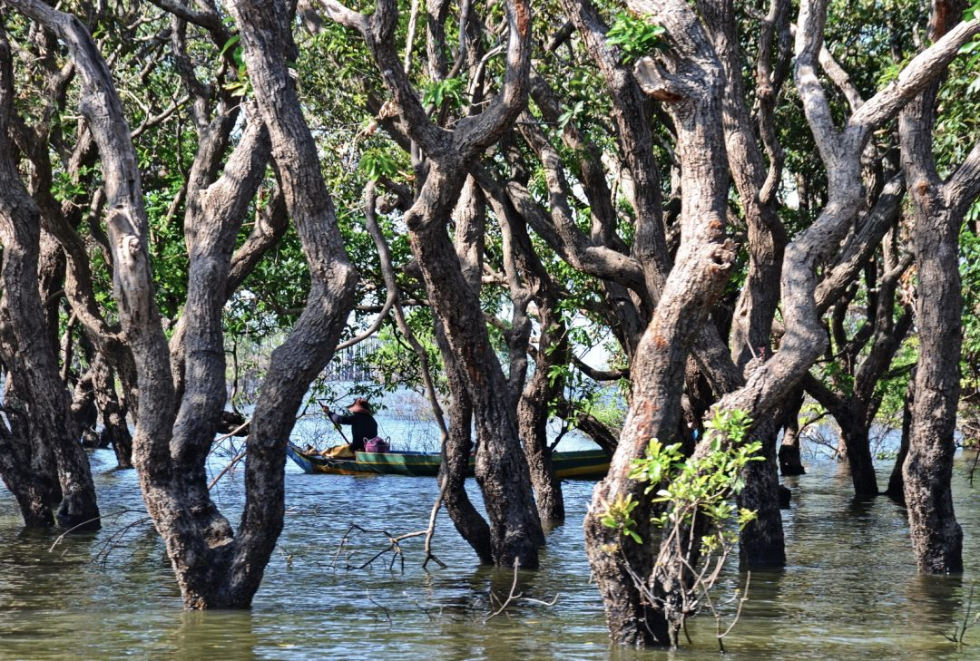 Cambodia, the Flooded Forest