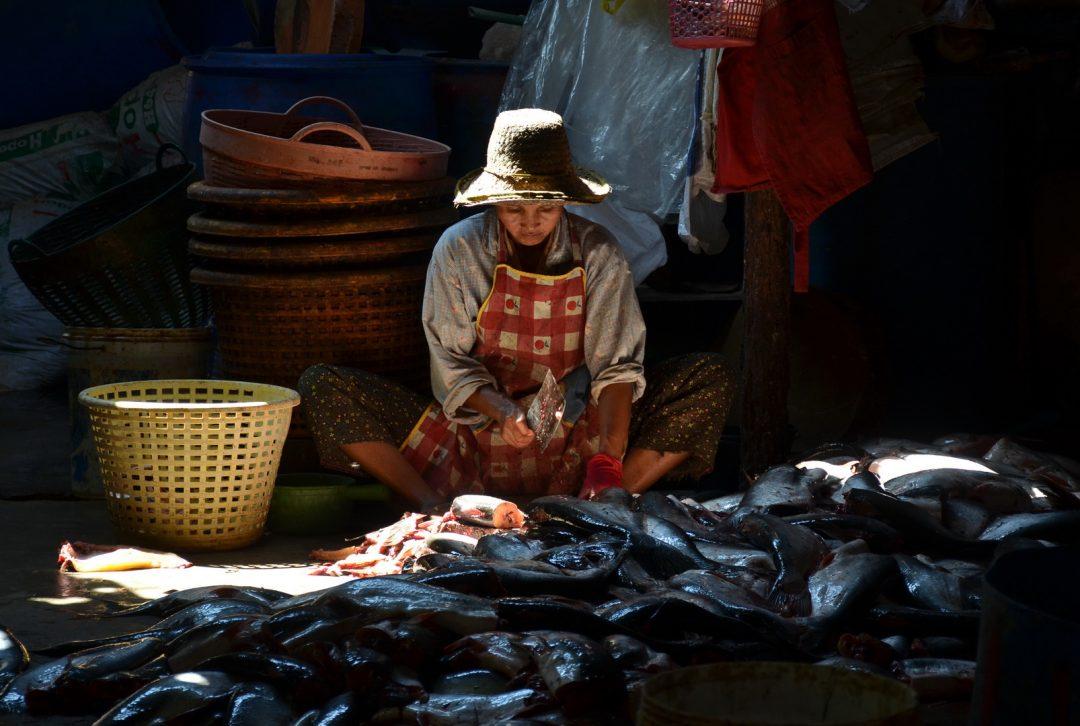 Cambodia, Battambang fish market