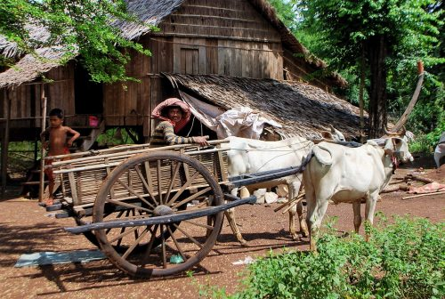 https://allpointseast.com/wp-content/uploads/2013/04/Ox-cart-Baray-district-500x336.jpg