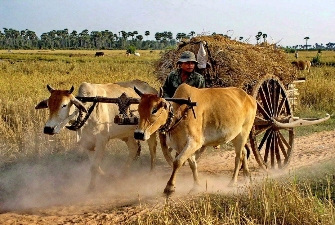 Cambodia, country scene