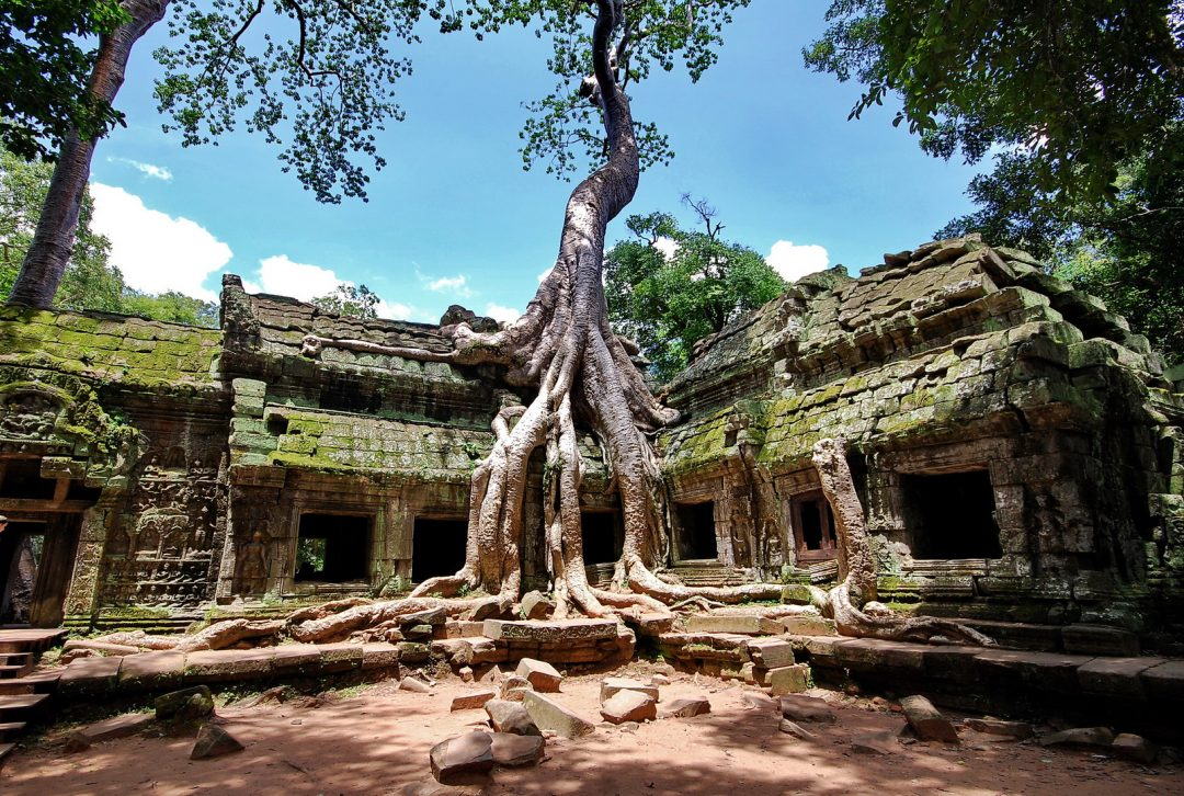 Cambodia, Ta Prom Temple, Angkor