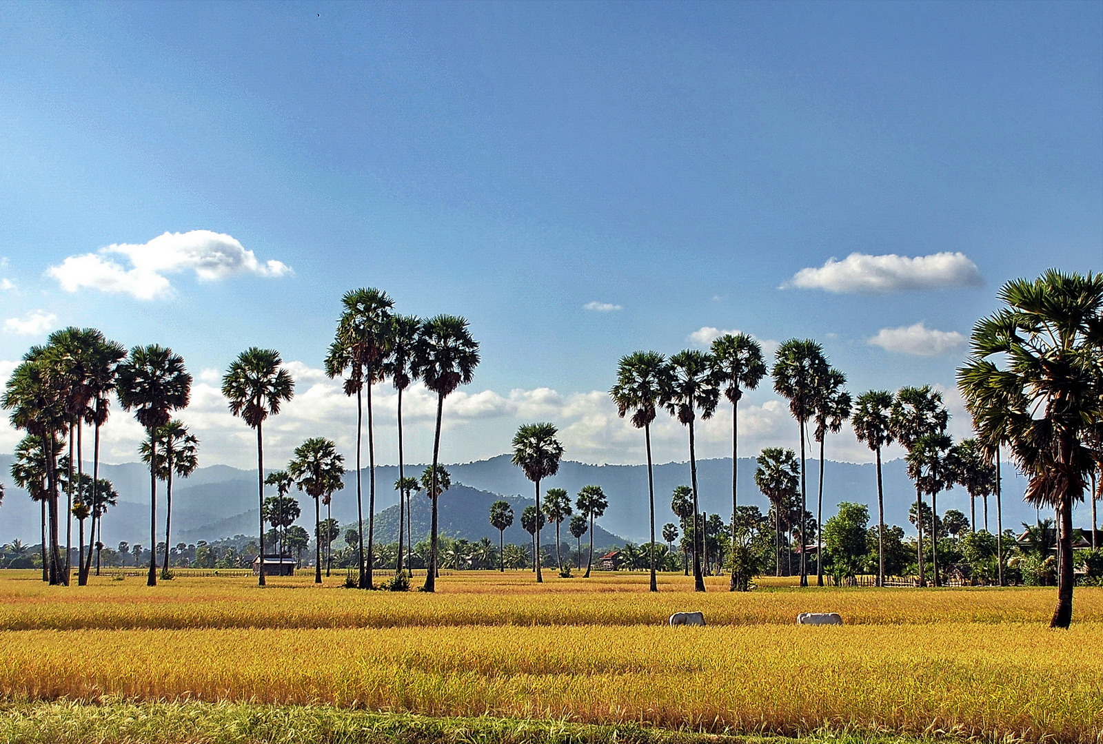 Cambodia, typical landscape