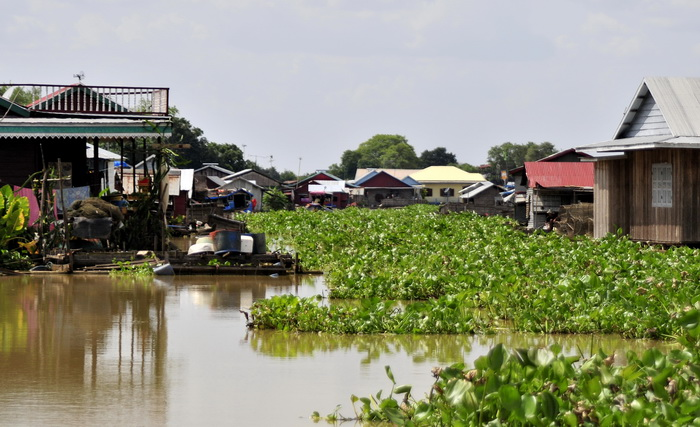 The main thoroughfare in Prek Toal floating village was completely bunged up