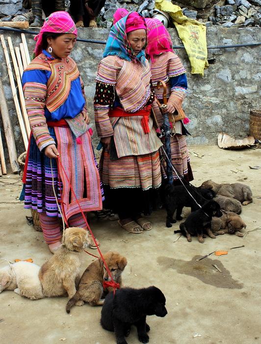 Dog sellers