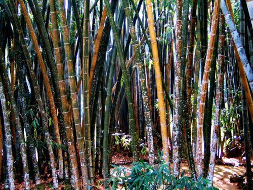 Royal Botanical Gardens Kandy