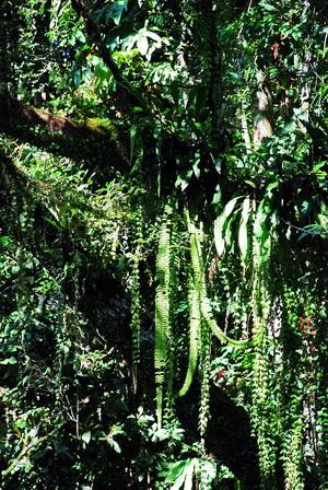 Jungle flora