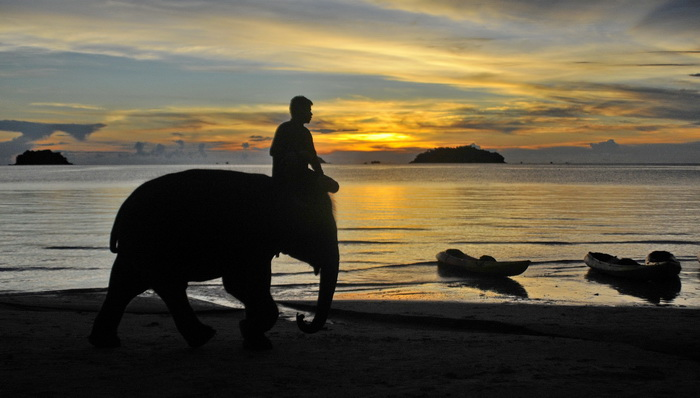 Koh Chang - bathing with elephants or sea kayaking?