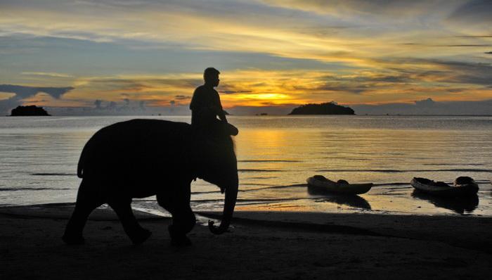 Koh Chang - bathing with elephants or sea kayaking?