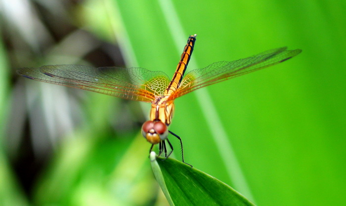Don't have any mosquito pics to hand so here's a much prettier flying insect that doesn't bite. (Actually a damsel fly not a dragonfly!)