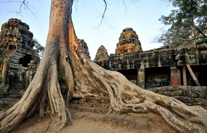 Banteay Kdei. It's not only Ta Prom that has giant roots