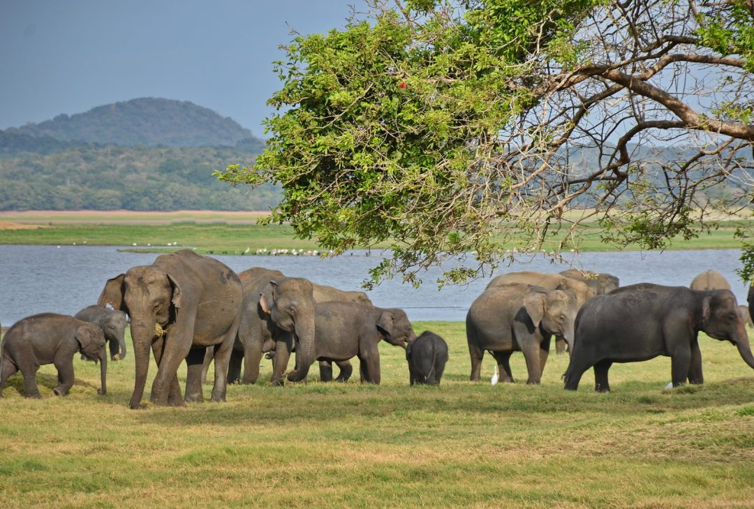 Sri Lanka Discovery, Minneriya