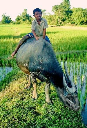 Laos, Family Adventure tour, 4,000 islands